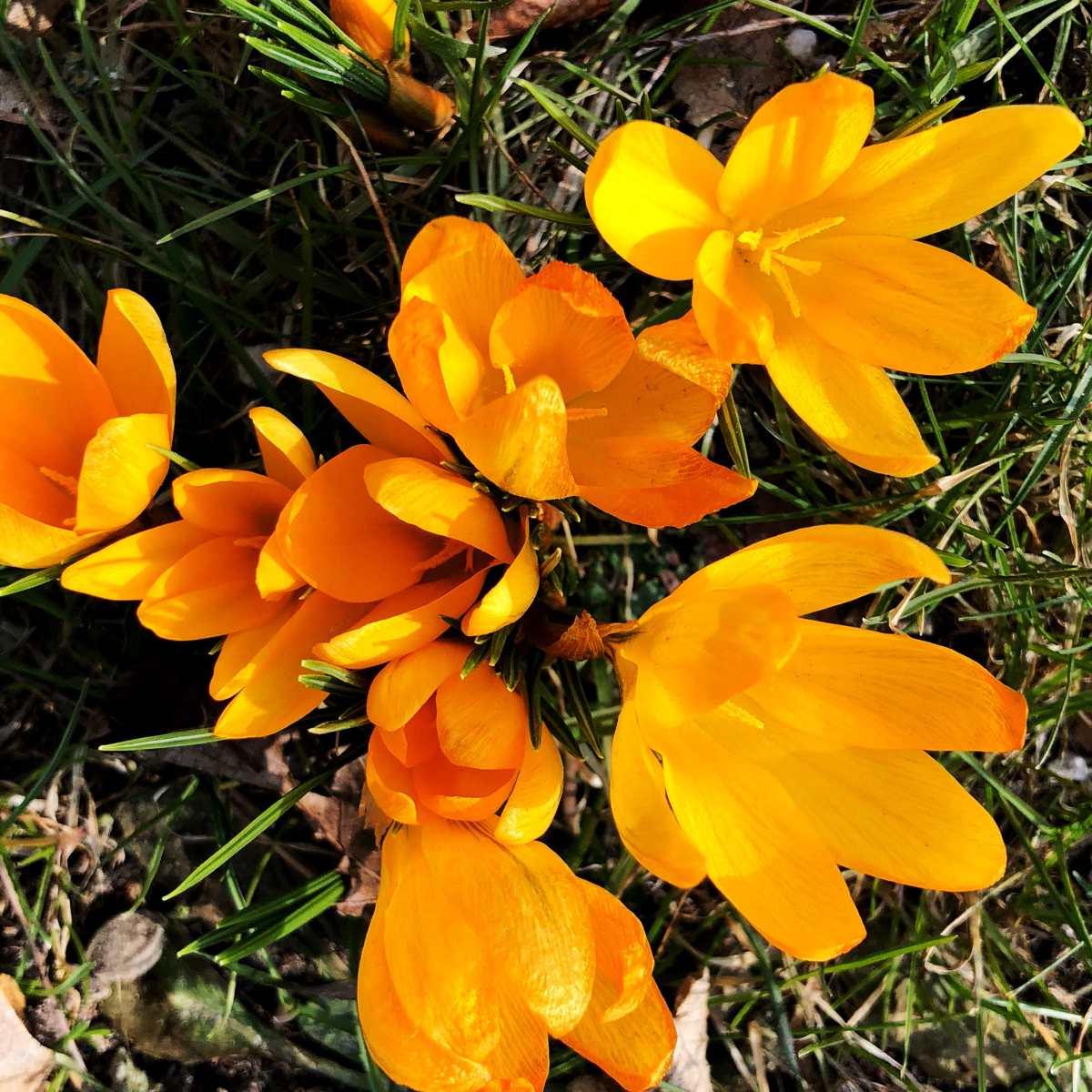 Frühling ist Pflanzzeit